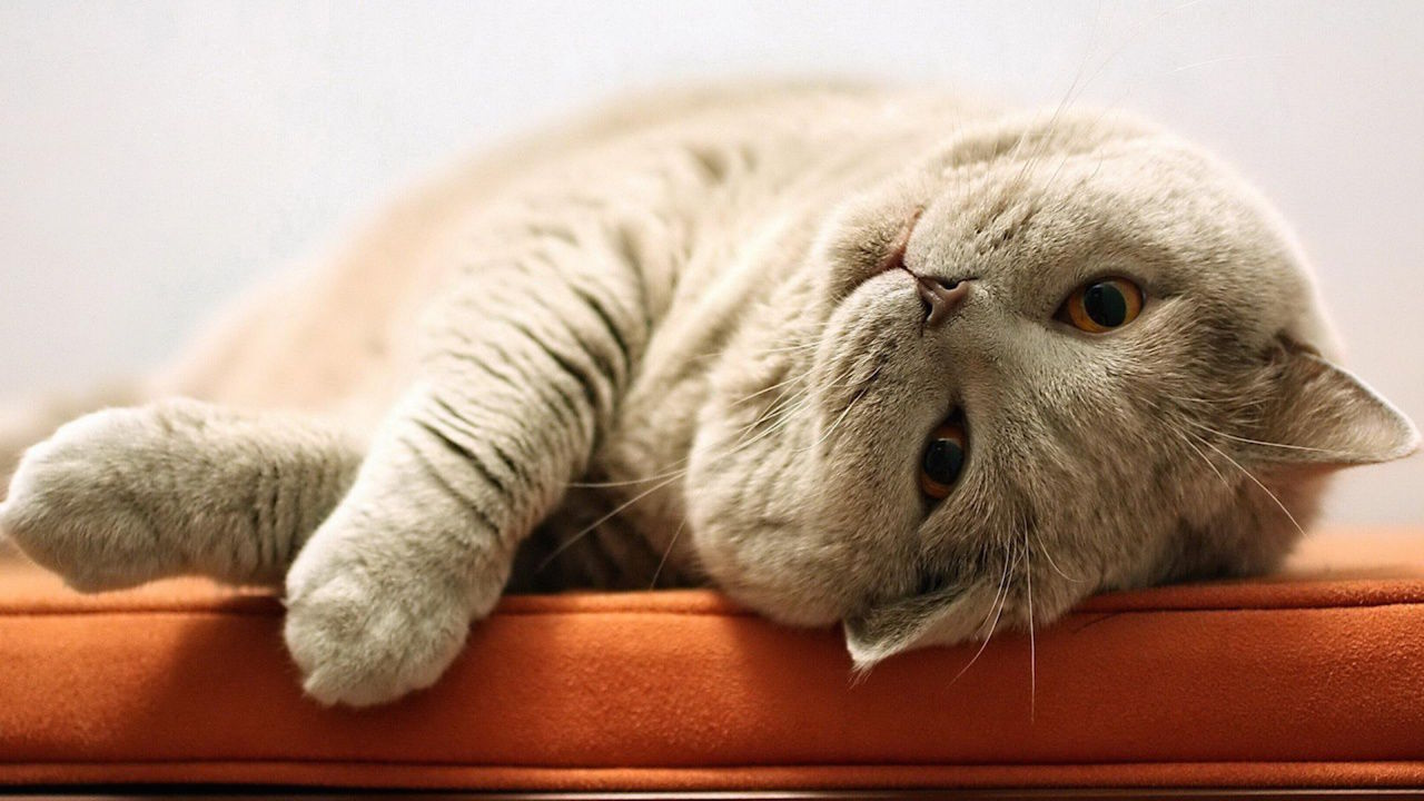 cat.ps.l